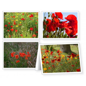 Our Daily Bread Readers' Notecards - Poppies